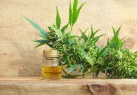 Tratamentul cu marijuana este legal, dar indisponibil