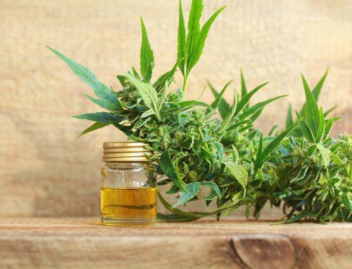 O lege tipic românească Tratamentul cu marijuana este legal, dar indisponibil!